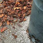 秋の足音ガシャガシャガシャ♪