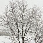関東 雪 54年ぶり